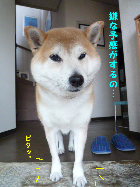 18日ブログ7.jpg
