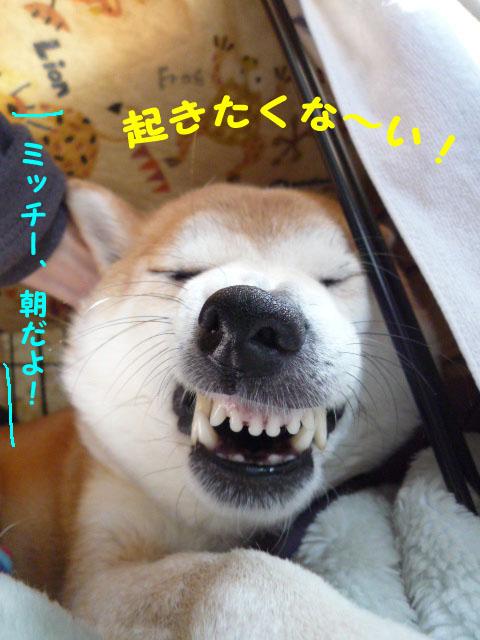 29日朝1.jpg