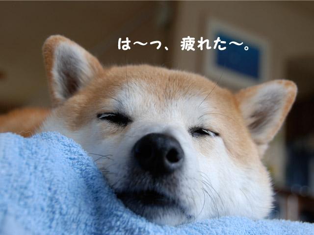 29日朝15.jpg