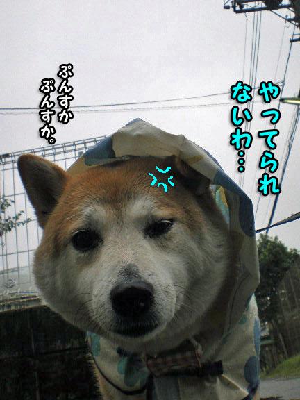 30日ブログ4.jpg