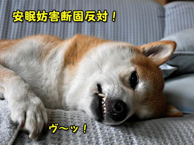 5日ブログ3.jpg