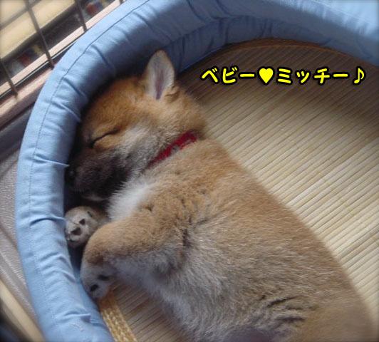 プールで昼寝