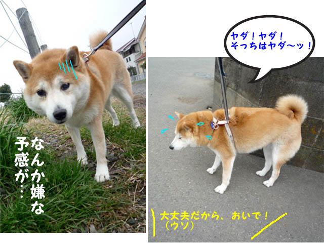 9日ブログ5.jpg