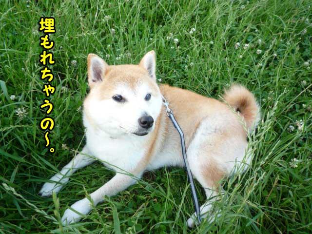 18日ブログ3.jpg