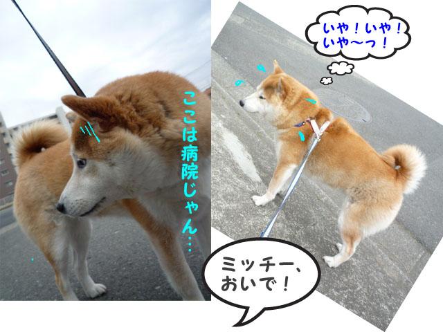 29日朝7.jpg